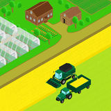 Combine and tractor trailer  harvest wheat. Vector illustration. Farm house with barn, country road, field of wheat. Combine and tractor trailer  harvest wheat Royalty Free Stock Image