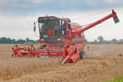 A combine at work in a cornfield. Processing of the grain in a cornfield by a powerful thresher Royalty Free Stock Photography