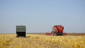 Combine working on a sunflower field. Combine harvester in the field during harvest sunflower.  stock video footage