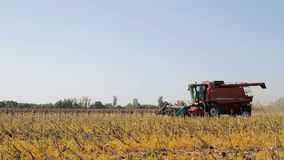 Combine working on a sunflower field. Combine harvester in the field during harvest sunflower.  stock video