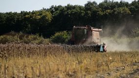 Combine working on a sunflower field. Combine harvester in the field during harvest sunflower.  stock footage