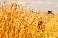 Combine working on a wheat field. A modern combine harvester working a wheat field Royalty Free Stock Photos