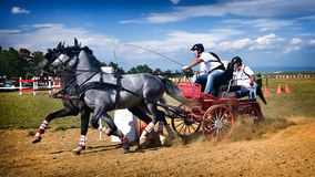 Horse And Carriage Competition Editorial Photography