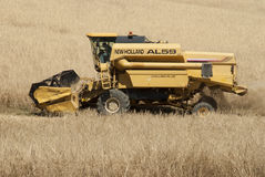 Combined Harvester. A Combined Harvester in a field of wheat in Italy Royalty Free Stock Image
