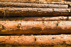 Combined logs Stock Photo