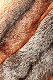 Combined silver and red fox fur background. Combined silver and red fox fur vertical background Stock Photos