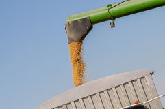 Combined soybean harvest and loading into grain truck Royalty Free Stock Photography