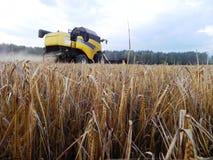 Combineer maait gras op de zomergebied Het oogsten na de zomer Details en close-up stock afbeeldingen