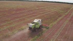 Combineer op gebied Luchtmening van maaimachines Seizoen van het verzamelen van gewassen boekweit stock videobeelden