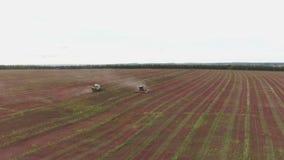 Combineert op gebied Luchtmening van maaimachines Seizoen van het verzamelen van gewassen boekweit stock videobeelden