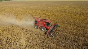 Combine harvest sunflower. During the day. Aerial shoot. In fall