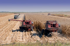 Combines Harvesting Corn Royalty Free Stock Photo
