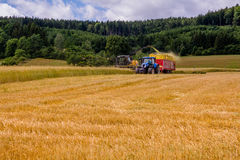 Combines harvesting grains and filling tractor trailer in summer on field. Next to forest Royalty Free Stock Images