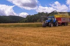 Combines harvesting grains and filling tractor trailer in summer on field. Next to forest Stock Image
