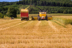 Combines harvesting grains and filling tractor trailer in summer on field. Next to forest Royalty Free Stock Photos