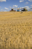 Combines harvesting wheat and filling trailer in sunny rural field Royalty Free Stock Image
