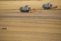 Combines harvesting wheat in sunny, rural field Royalty Free Stock Images