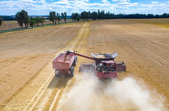 Combines and tractors working on the wheat field Stock Images