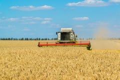 combinez la récolte de grain de récoltes dans le domaine, Russie photographie stock