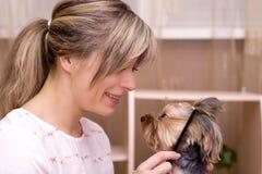 Combing beard of Yorkshire Terrier. Stock Photo