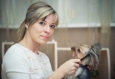 Combing beard of Yorkshire Terrier. Stock Images