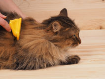 Combing brush and  cat   on the wood  background Royalty Free Stock Image