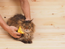 Combing brush and  cat   on the wood  background Stock Photos