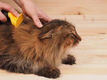 Combing brush and  cat   on the wood  background Royalty Free Stock Photos