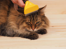 Combing brush and  cat   on the wood  background Royalty Free Stock Photo