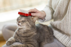Combing the cat Stock Photo