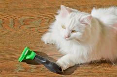 Combing white fluffy angora cat Furminator. S Stock Photography