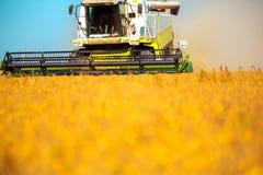 Combini la macchina con la carrozza che raccoglie l'avena sull'azienda agricola Fotografie Stock