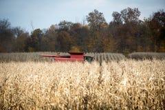 Combining corn field Stock Photos