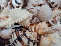 Combo van shells met texturen achtergrondbehang, strand Oceaan royalty-vrije stock fotografie