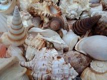 Combo van shells met texturen achtergrondbehang, strand Oceaan stock foto