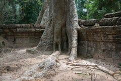 Combodia świątyni dżungle obrazy royalty free