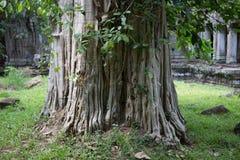 Combodia świątyni dżungle zdjęcie stock