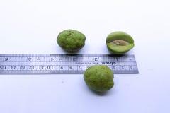 Combretaceae, Terminalia-chebula Retz var-chebula lizenzfreie stockfotos