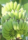 Combs bananas. Stock Photography