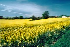 Combustíveis biológicos do campo do rapeseed Imagem de Stock