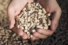 Combustibile biologico Fotografia Stock