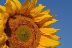 Combustible biológico Imagen de archivo libre de regalías