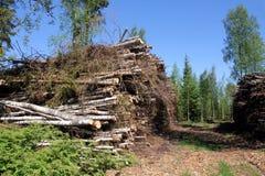 Combustible de madera para la potencia y la energía en bosque del verano Fotos de archivo
