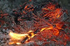 Combustion de branches de sapin Images libres de droits