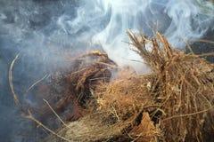 Combustion de la coquille du plan rapproché de noix de coco pour faire cuire, le feu, fumée, barbecue, la coquille de noix de coc Image libre de droits