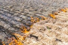 Combustion des restes dans la culture agricole Photographie stock