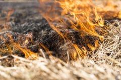 Combustion des restes dans la culture agricole Image libre de droits