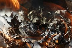 Combustion -- Les feuilles mettent le feu et fument Photographie stock libre de droits