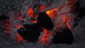 Combustione del fuoco del carbone archivi video