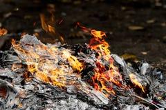 Combustione del fuoco nella foresta Fotografia Stock Libera da Diritti